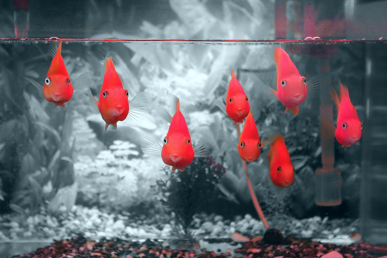 vörös foltok a halak arcán vörös foltok a bőrön izzadság fotó
